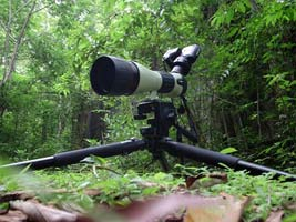 Digiscoping Panama